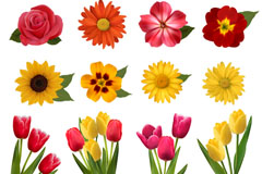 Link to12 beautiful flower design vector