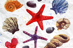 Link to13 watercolor starfish and seashell vector diagrams