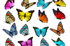 Link to19 color butterfly vector