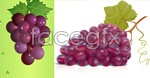 Link to2 bunch of grapes-vector