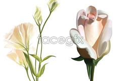 Link to2 realistic ai format flowers vector