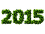 Link to2015 pine font vector
