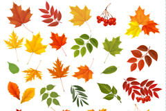 Link to26 colorful autumn leaves design vector