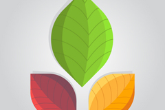 Link to3 colour leaf design vector