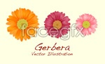 Link to3 daisy flowers vector