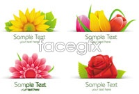 Link to3 gorgeous flowers vector map