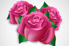 Link to3 pink roses flowers vector