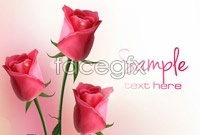 Link to3 pink roses vector map