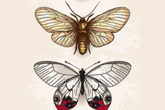 Link to3 vintage butterfly vector