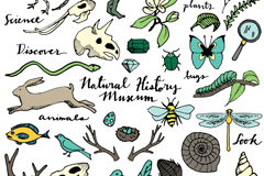 30 natural wildlife vector
