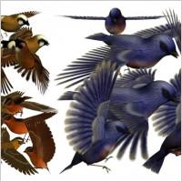 Link to3d bird psd layered