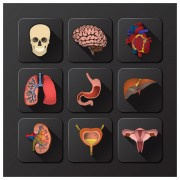 Link to3d icons internal organs vector free
