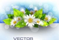 4 chrysanthemum background banner vector