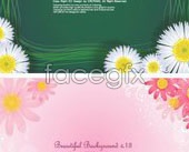 Link to4 chrysanthemum flowers backgrounds vector tools