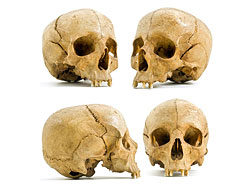 Link to4 different angle skull hd pictures