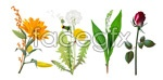 Link to4 flower vector