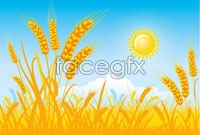 Link to4 golden wheat vector graphics