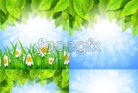 Link to4 green leaf chamomile vector map