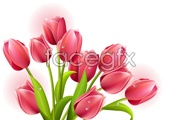 Link to5 beautiful flowers vector