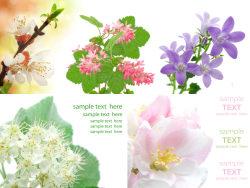 5 elegant flowers hd pictures