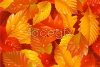 Link to5 red leaves autumn background vector