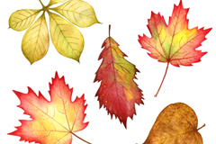 Link to5 watercolor autumn leaf design vector