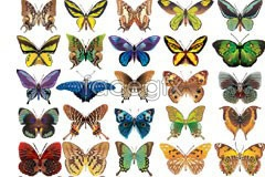 Link tovector butterfly realistic beautiful 50