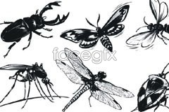 vector insect white and black refined common 6