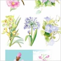 Link to7 elegant watercolor flowers vector