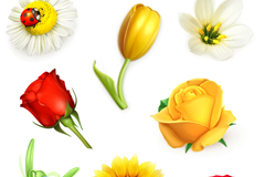 8 beautiful realistic flowers vector