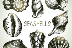 Link to8 hand-painted shells design vector