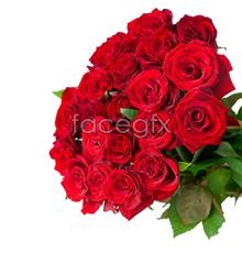 Link toA bouquet of beautiful roses pictures