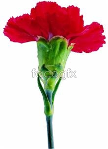 Link toA bouquet of carnation picture