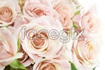 Link toA bouquet of pink roses psd