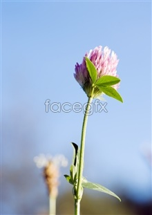 Link topictures flowers flower pink A