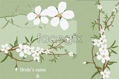 Link tovector flowers white plain and fresh of set A