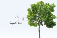 Link toA variety of green trees vector graphics