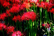 Link toAcross the beautiful flower pictures hd