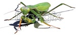 Link toAi realistic mantis vector