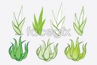 Link toAloe green vector
