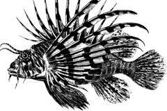Link toAntique lionfish vector