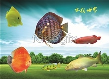 Aquarium ornamental fish psd -3