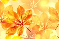 Link toAutumn gold leaf background vector