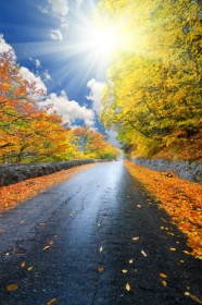 Link toAutumn landscape path hd pictures