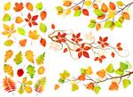Link toAutumn leaf branch vector