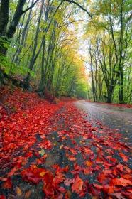 Link toAutumn leaves admissible landscape pictures