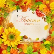 Link to01 set vector frame leaves Autumn