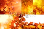 Link toAutumn leaves psd