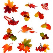 Link toAutumn leaves with fruit vector 01 free