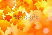 Link toAutumn maple leaf chinese restaurant background vector c